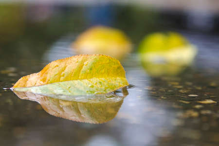 autumn leaf with reflection in water photo