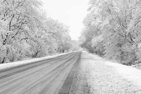 winter snow-covered road through the forest photo