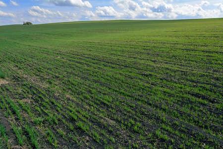 field and sky: un hermoso paisaje del cielo campo Foto de archivo