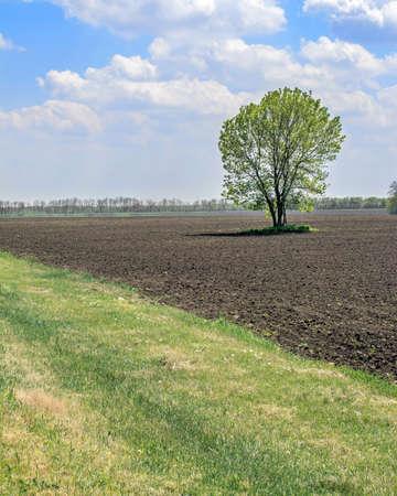 field and sky: paisaje del cielo campo y el �rbol solitario Foto de archivo