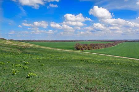 field and sky: a beautiful landscape of the field sky Foto de archivo