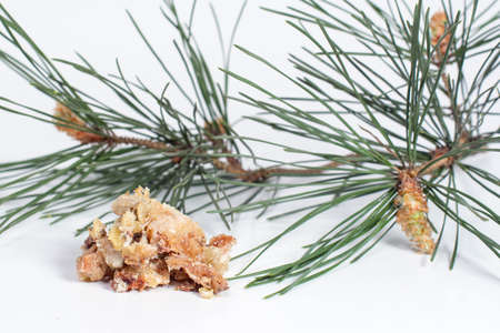 oleoresin: congealed juice and a sprig of pine