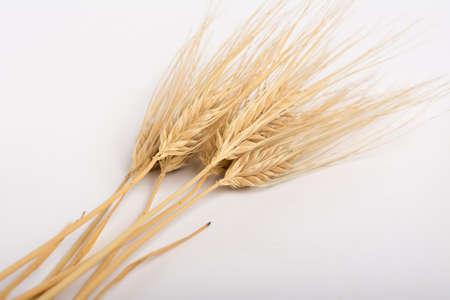 bran: ears of corn of grain crops