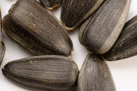 sunflower seeds close-up, macro photography