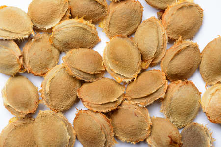 many unpeeled apricot seeds
