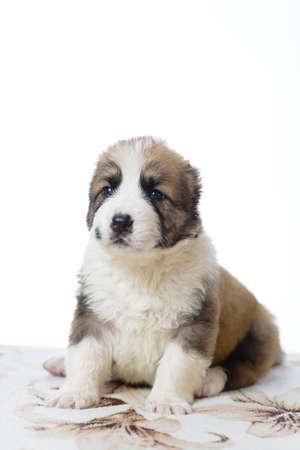 animalitos tiernos: novio lindo perro Foto de archivo