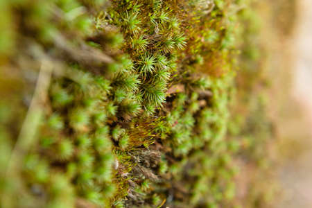 volga: Moss Volga river grass nature macro