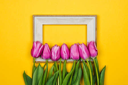 beauty of march. purple tulips over a white frame on yellow background