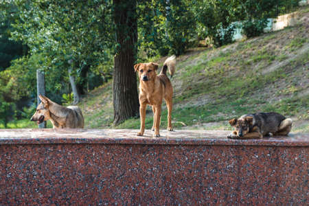 friendly abandoned homeless street dogs peacefully laying and staying on a marble rock in city park.