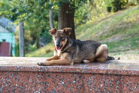 friendly abandoned homeless street dog peacefully laying on a marble rock in city park.