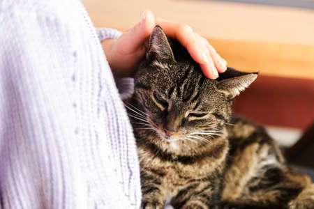 lonely stray cat in human arms feeling beloved