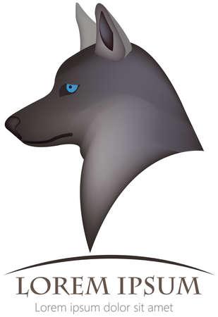 aciculum: wolf illustration Illustration