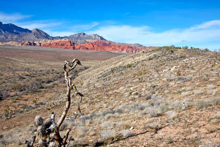 View of dry landscape and red rock formations of the Mojave Desert. photo