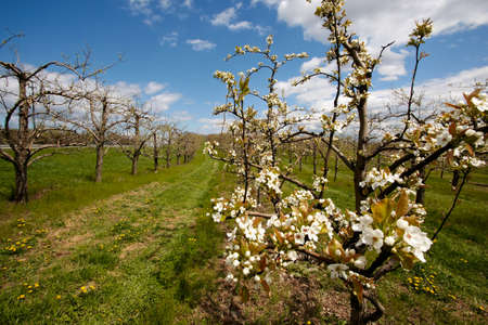 Orchards in rural areas of Upstate New York. photo