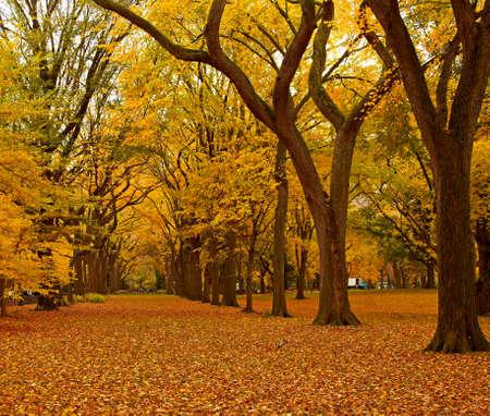 New York City Central Park steegje in de herfst.