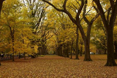 central: Callej�n de la ciudad de Nueva York Central Park en el oto�o.