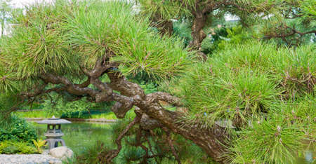 View of the Japanese Garden and pond. Stock Photo