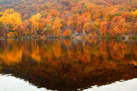 森の湖で反映して美しい秋の色。