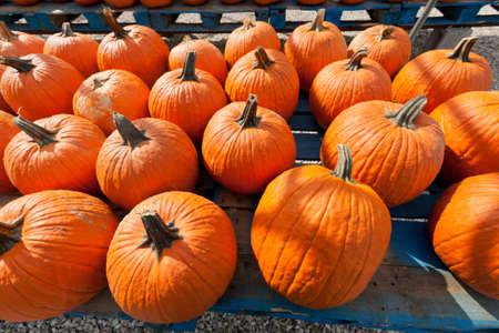 Colorful pumpkins at the farmer market. photo