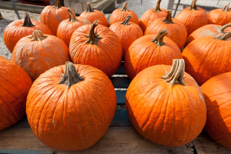 Colorful pumpkins at the farmer market.