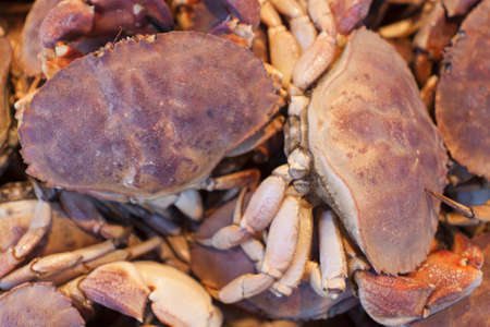 Crabs on displat at the seafood market  Stock Photo - 12981949