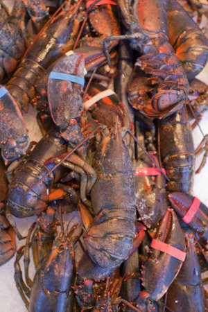 Fresh lobsters at the seafood market Stock Photo - 12981962