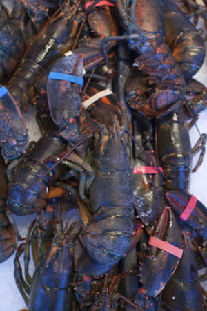 Fresh lobsters at the seafood market  photo