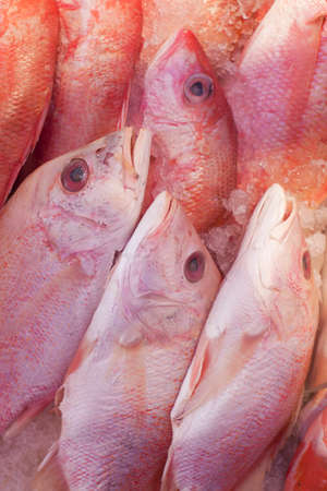 Fresh catch of fish at the seafood market. Stock Photo - 12981940