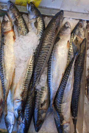 Fresh catch of fish at the seafood market. photo