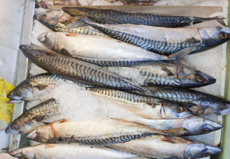 Fresh catch of fish at the seafood market. Stock Photo - 12986694