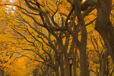 New York City Central Park alley in the Fall. photo