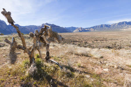 View of dry landscape and red rock formations of the Mojave Desert.. Stock Photo - 13909570
