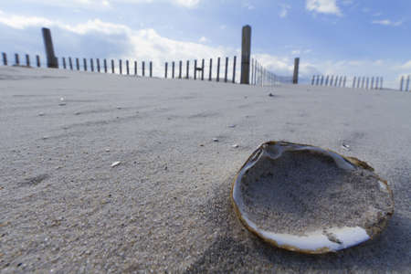 Clam shell on the beach on a hot summer day photo