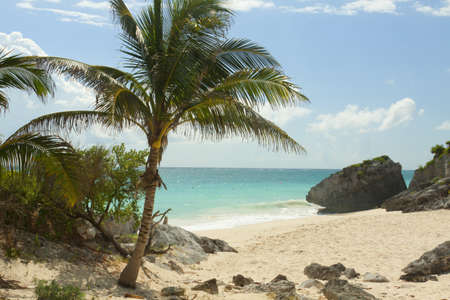 A view of the caribbean beach. Stock Photo - 13984231