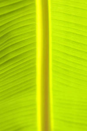 Close-up view of the banana leaf  photo