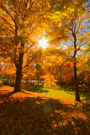 Colorful fall scenery landscapes.