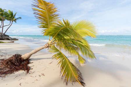 Palm trees on the tropical Caribbean beach. Banco de Imagens
