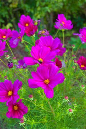 sch�ne blumen: Beautiful flowers. Lizenzfreie Bilder