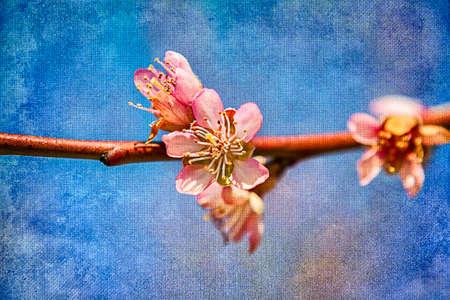 sch�ne blumen: Sch�ne Blumen. Lizenzfreie Bilder