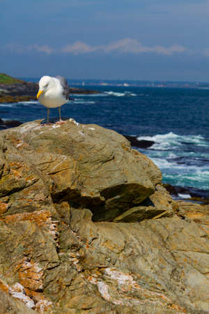 rocky: Rocky shore