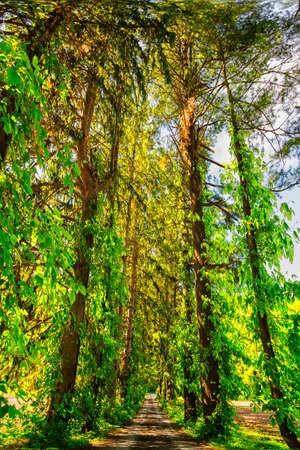 arbre paysage: Tree landscape