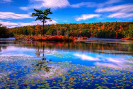 fall landscape: Fall landscape with the forest lake.