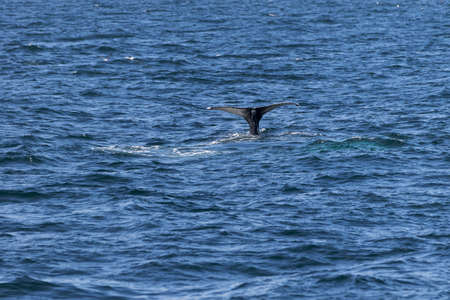 whale watching: Whale watching experience off the coast of Atlantic. Stock Photo