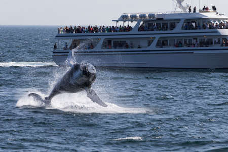Whale watching experience off the coast of Atlantic. Stock Photo