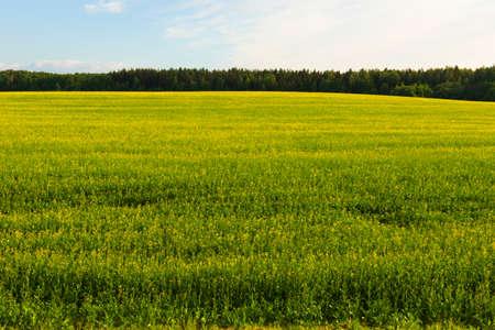 View of the farmland fields.