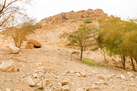 mountain oasis: Ein Gedi Nature Reserve in Israel. Stock Photo