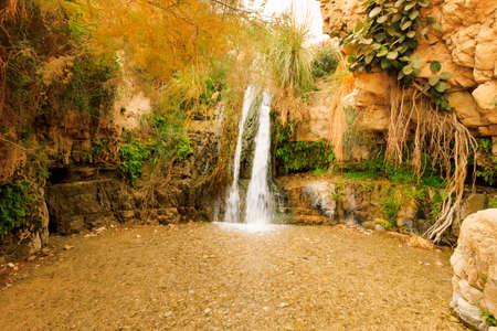 Ein Gedi Nature Reserve in Israel. Imagens