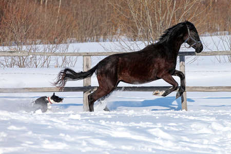 Horse in winter on the farm photo