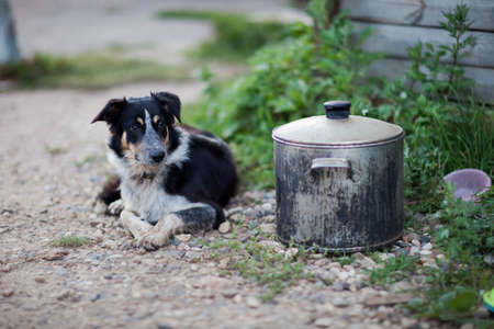 Border Collie guarding a pot of food photo