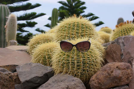 Funny cactus with glasses surrounded by stones.